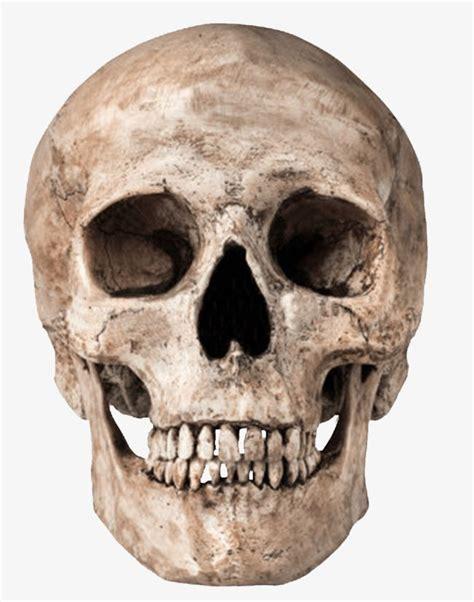낡은 해골, 머리뼈, 해골, 해골무료 다운로드를위한 PNG 및 PSD