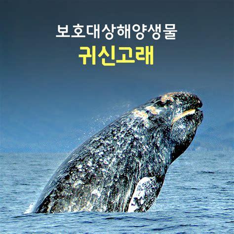 귀신고래 크기, 이야기를 알아보아요 : 네이버 블로그