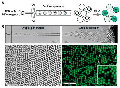 Micromachines   Free Full-Text   Droplet Microfluidics