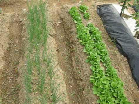 천연농약만들기-5월중순 : 네이버 블로그