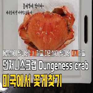 미국 꽃게 영어로 던져니스크랩 던지니스크럽 Dungeness crab