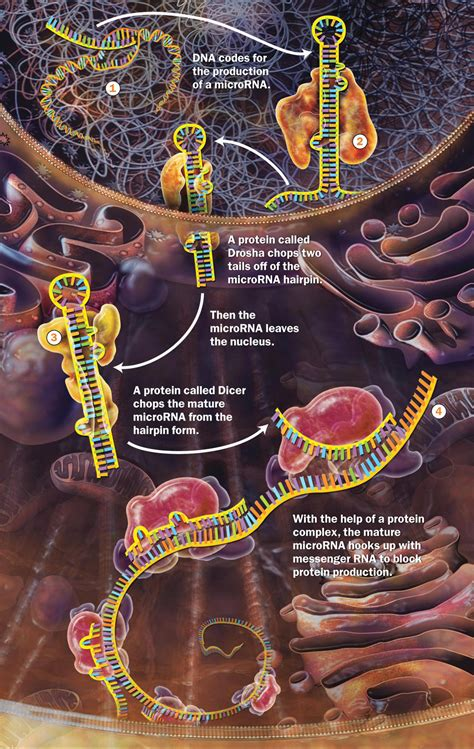 Mind and Molecular Genetics in the Neuron: Part 1   Jon