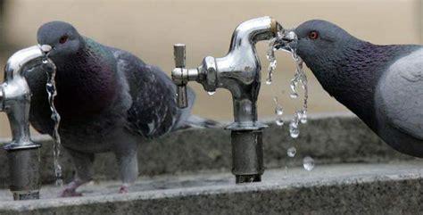 요즘 공원이나 학교의 음수대에서 물을 먹으면 안되는 이유