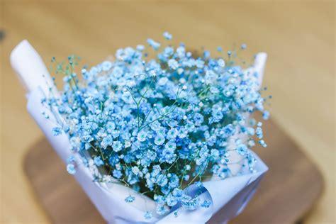파란 안개꽃 > 갤러리 | 4FLIX - 넷플릭스 한국 팬 커뮤니티 4(넷
