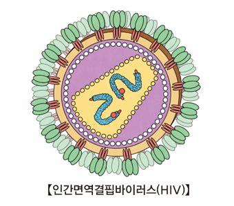 증상이 없는 HIV 감염 | 질환백과 | 의료정보 | 건강정보 | 서울