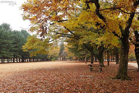 유리동물원의 빛으로 그리는 그림 :: 가을 풍경 사진 모음